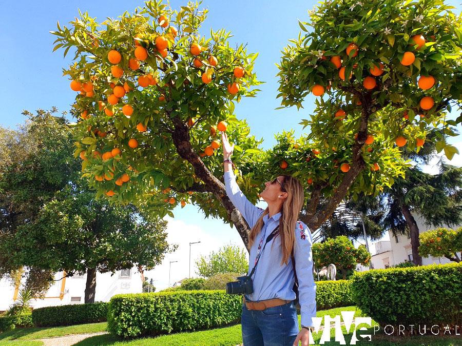 Naranjos en Vila Viçosa