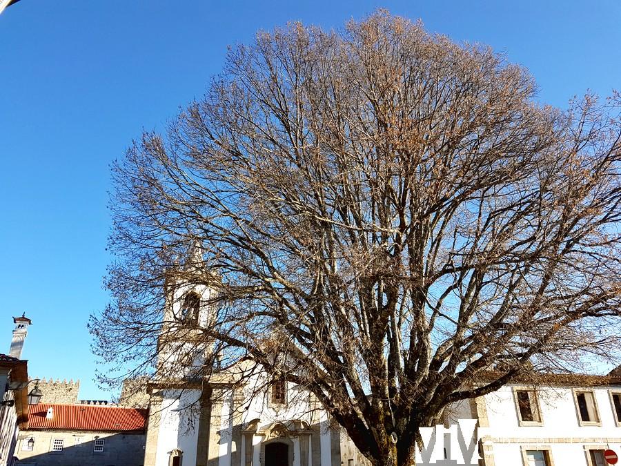 Igreja de Santa Maria de Guimarães y tilo